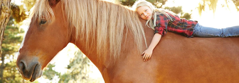 Professional Equine Care
